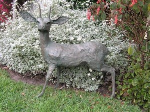 Steenbok (lifesize)